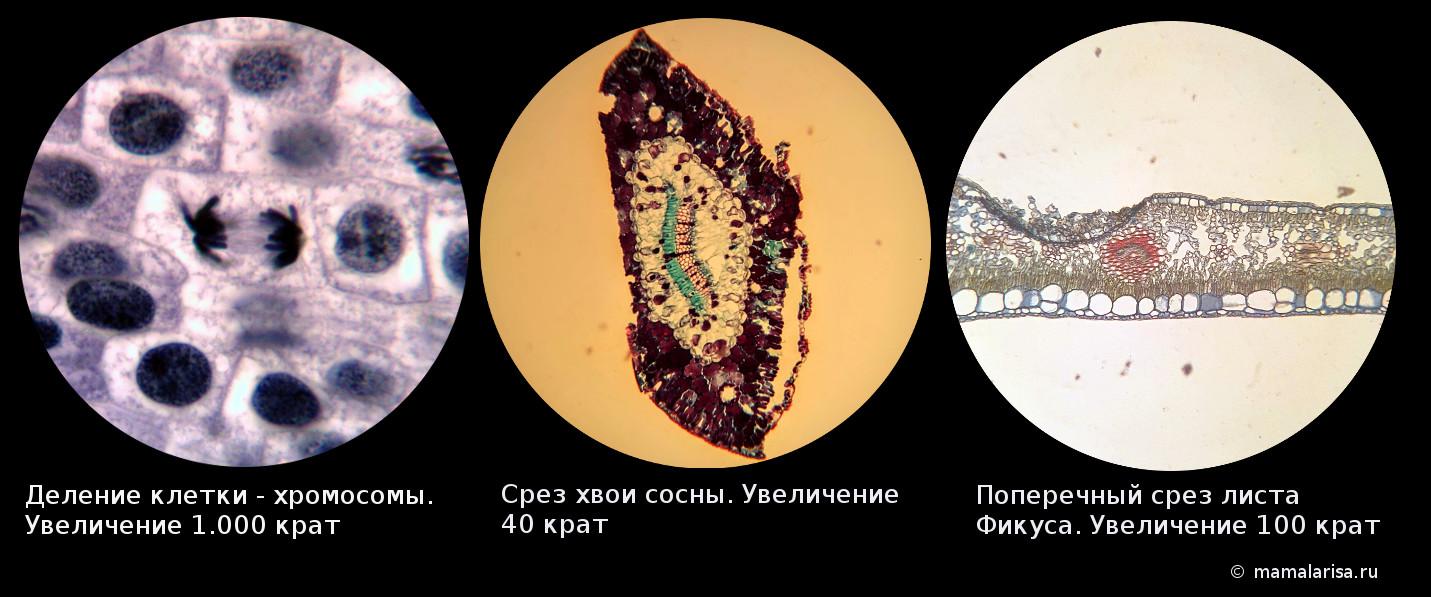 Фото в школьные микроскопы