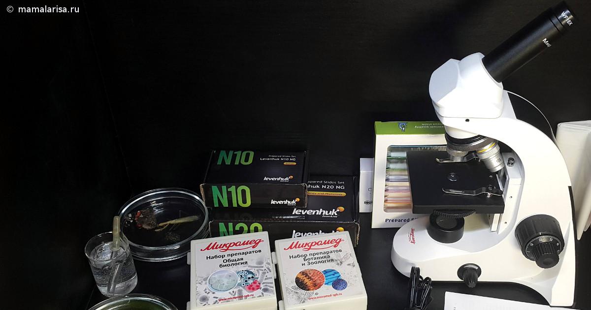 Как выбрать и купить микроскоп для школьника